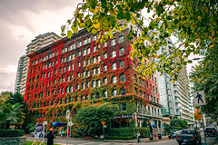 The Sylvia Hotel in Autumn (どこでもいっしょ) Tags: autumn canada leaves vancouver britishcolumbia autumncolors englishbay ricohgr grd gw3 thesylviahotel
