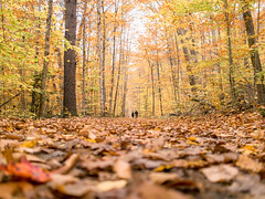 fall walkway (ekonon) Tags: autumn fall leaves woods vermont hiking low ground hike lowangle explored mtsubmission