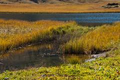 Afrika oder Heimat (bounty390) Tags: herbst natur gras grün braun blau farbe schilf vorarlberg herbstlich kalbelesee