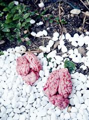 La fuite des cerveaux (Louise Rossier) Tags: portrait brain humour sang blanc triptyque drôle cerveau cervelle fuitedescerveaux