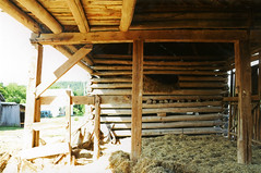 North Pen, Double Pen Log Barn — Ross County, OH (Pythaglio) Tags: county trees ohio house mountain building film loft barn pen photo ross log farm hill twin double structure historic frame round scanned opening hay teardrop demolished township jamb outbuilding joists mortise tenon haymow braced mortised tenoned ca2011 roundlog unchinked