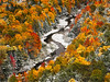 A Stream of Ice and Fire (posthumus_cake (www.pinnaclephotography.net)) Tags: autumn snow fall nature mi forest landscape october fallcolor hiking michigan wilderness upperpeninsula blizzard porcupinemountains bigcarpriver