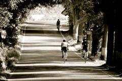 Cycling Tuscany / Bibbona (Arnaud Bachelard) Tags: road italy andy bike cycling italia andrew tuscany ciclismo bici toscana toscane italie vlo carducci cyclisme bolgheri castagneto hampsten