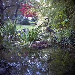 Rock Garden, park Valentine, Turin (magioca65) Tags: 6x6 torino kodak bokeh 1939 skopar kodakportra400iso epsonv600