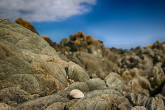 Shell On The Coastline (A Guy Taking Pictures) Tags: