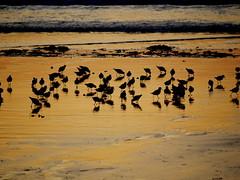 Bad in Gold - Erquy Frankreich (wulfwalker) Tags: sea seascape france strand landscape gold seaside frankreich meer wasser bretagne vgel abendlicht erquy sonnenauntergang mwen