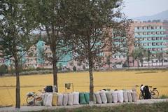 2014 Oct North Korea trip DPRK  (2486) (Lawrence Wang ) Tags: trip korea korean northkorea nk pyongyang dprk  northkorean