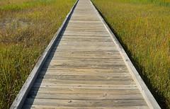 Marsh Boardwalk Bridge (hpaich) Tags: park bridge newjersey nj walkway swamp wetlands jersey boardwalk marsh oldbridge cheesequake cheesequakestatepark marshgrass