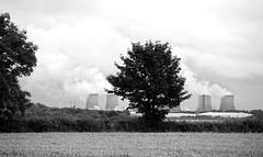 Trees Go Green! Man Makes Steam! [Explored] (G8lite) Tags: