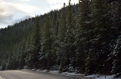 The Pines that Line the Road (JasonCameron) Tags: road park autumn mountain snow fall drive october colorado pavement rocky pines national rmnp dust frosting