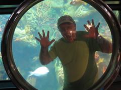 October 21, 2014 (170) (gaymay) Tags: california fish water sandiego magnifyingglass seaworld mamals