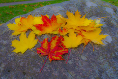 Autumn Leaves (AudioClassic) Tags: road park old autumn winter red orange sunlight white plant black tree green fall nature leaves yellow misty stone mystery architecture season landscape outdoors gold golden leaf woods october gate tallinn estonia scene illuminated backgrounds environment mapletree multicolored sunbeam autumnal vibrantcolor colorimage famousplace autumntree deciduoustree autumnforest kadriorgpalace autumnlandscape autumnglory beautifulautumn ancientgate foliag tallinncity