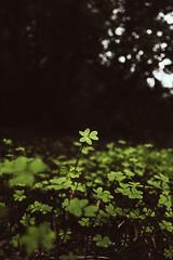 (Dailos Garca) Tags: verde luz vintage nostalgia garcia 2014 trebol treboles dailos