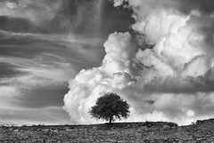 Loneliness [#38 Explored 8-11-2014] (ChrisBrn) Tags: bw tree clouds ancient theater greece