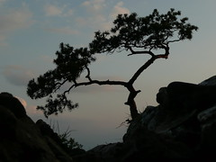 looking down (annafromlublin) Tags: trees sky mountain tree evening dusk treesubject