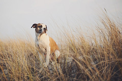 11/52 when will it get warmer? (Jutta Bauer) Tags: 52weeksfordogs 52weeksforedgar 1152 edgar excellentedgar dog