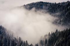 Silence (CreArtPhoto.ro) Tags: trees iarna seaofclouds padure nori cozia forest romania lonely beauty landscapephotography zapada clouds snow