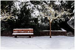 Banc i arbre tapats per la neu (Rafel Miro) Tags: mura cataluna españa esp arbol arbre banc banco bench bosc bosque catalonia catalunya forest hivern invierno lamola matadepera neu nieve snow tree winter