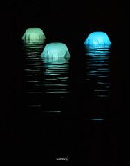 Méduses (Weblody) Tags: meduses lumieres