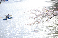 SAKURA (20EURO) Tags: sakura spring flower cherryblossoms bright warm sunlight season change nature landscape pink blossoms cherry boat fun pond weekend holiday 桜 beautiful photograph canoneos5dmarkⅲ 千鳥ヶ淵 皇居 tokyo japan