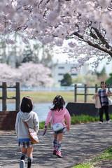 PSX_20170408_230311 (m ito) Tags: japan sakura pink 桜 さくら 権現堂 ピンク 女子 girl spring 春 ml135mmf28 yashica cy fujifilm xt1