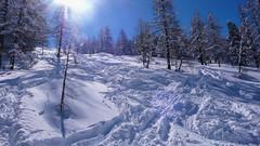 Zjazd lasem od schroniska Rif. F. Chabod 2750m. po opadach śniegu. (Tomasz Bobrowski) Tags: vittorioemanuelleii góry valsavarenche narty alpy graianalps riffchabod2750m mountains skitury skitouring alps ski alpygraickie skitura