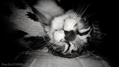 The kitten Alice, in deep sleep... (PY6RDM) Tags: gato cat pretoebranco preto branco bw motog4plus moto motorola lenovo
