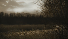 Blotched skies (Coisroux) Tags: trees blotched brightness skies clouds riverbank winding forests embankment dramatic ominous hazy d5500 nikond hamptonvale reeds waterfront reflections silhouette landscapes calming luminescent