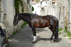 Dans-les-rues-d'Arles (RS...) Tags: arles cheval horse rue street selle saddle d800
