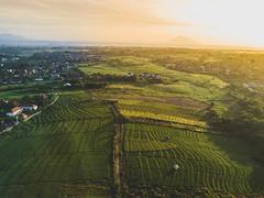 DJI_0681 (matsandersen) Tags: dji mavic pro canggu bali ricefields sunrise goldenhour