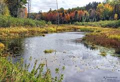 Ottawa National Forest near Bond Falls in the Upper Peninsula of Michigan (PhotosToArtByMike) Tags: ottawanationalforest michigan mi upperpeninsulaofmichigan paulding upperpeninsula pond up uppermichigan autumn autumnleaves bondfalls