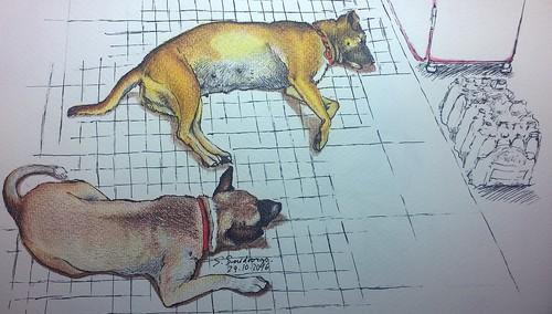 Dogs Hua Hin