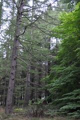 Bendora Arboretum, Canberra (Pinch River) Tags: gabriellatagliapietra namadginationalpark bendoraarboretum brindabellaranges arboretum nature australia canberra australiancapitalterritory trees chaletroad