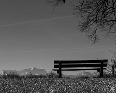 Sit down for a view (axeleckenberger) Tags: aidenried alps bayern germany illfordortho80 starnberg tree xequalspresets zugspitze bench blackandwhite highcontrast landscape mountains nature noperson sky pähl de