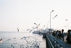 (SingC) Tags: leicaminilux film bangpu seagull travel