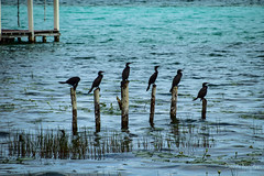 Bacalar (123) (Danni Thompson) Tags: travel backpacker mexico 2015 november