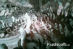 Auttthaya (krashkraft) Tags: 2015 allrightsreserved ayutthaya cockerel infrared krashkraft nareusuanpark tambonphailing changwatphranakhonsiayuttha thailand changwatphranakhonsiayutthaya th