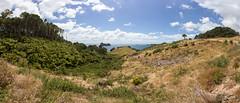 Hills above Stingray Bay, Hahei, New Zealand (maxunterwegs) Tags: aotearoa coromandel coromandelpeninsula hahei landscape microsoftice nz neuseeland newzealand nouvellezélande novazelândia nuevazelanda pano panorama region stitch stitched waikato