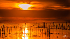 The sun mirror (roziovicentphoto) Tags: sun mirror sunset light orange red water lake nature outdoors sky clouds albufera valencia spain nikond7200 tamronlens landscape