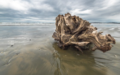 Driftwood (RussellK2013) Tags: longbeach beach beaches tofino britishcolumbia canada sea seascape sand wood driftwood sky cloud clouds dramatic water ocean scene scenery scenicsnotjustlandscapes scape scenic landscape nikon nikkor 1635mmf4ged 1635mmf4vr 1635mm uwa wide wideangle ultrawideangle outdoor travel nature d750 explore