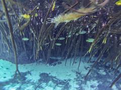 Tulum Casa Cenote aqua water mangroves-3