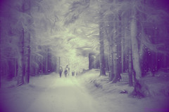Through the Forest (Kike K.) Tags: forest wood tree branches people monochrome purple lomo vignette mystery melancholy walk hiking mountain adriatic sea mediterranean landscape stroll weg path sun light sunlight wilderness old mood atmosphere rain water drops nature natural spring primavera wild march 2017 canon wide