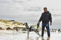 mustang (stphanielegay) Tags: mydog mustang dalmatien dogphotography dog sun sea nikond7200 50mmf18d nikon ngc