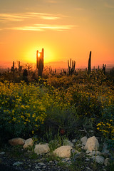 20170320-DSC_4959 (lilnjn) Tags: arizona landscape southwestunitedstates travel unitedstates sky sunrise whitetank