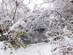 IMG_2839 (sjj62) Tags: s90 snow snowscape lith lakeinthehillsil winter winterscape