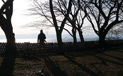 Surveying The Lands (DMeadows) Tags: davidmeadows dameadows davidameadows dmeadows japan japanese hikone castle history historic defence tourist tourism visit asia trip travel tree trees wood woodland wooden leaves garden gardens