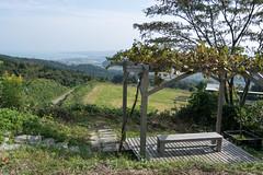 DSC_6391.jpg (d3_plus) Tags: street sea sky nature japan restaurant vineyard cafe scenery wine outdoor farm hill winery  streetphoto toyama     johana j4    himi   nanto fishingport         nikon1      1nikkorvr10100mmf456 1 nikon1j4  saysfarm