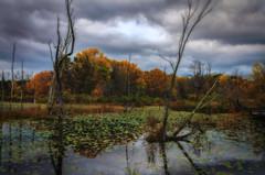 Cuyhoga Valley National Park (synthesis36) Tags: autumn ohio fall landscape nikon sigma nationalparks d5100 cuyhogavalleynationalpark nikond5100