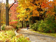 Last Leaves Of Autumn (flipkeat) Tags: autumn trees color fall nature leaves port landscape colours awesome canadian credit