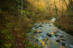 A Path Upstream (G Michael Lewis) Tags: longexposure autumn trees fall nature water leaves creek forest landscape outdoors midwest scenery stream fallcolor hiking trails foliage missouri ozarks marktwainnationalforest greerspring